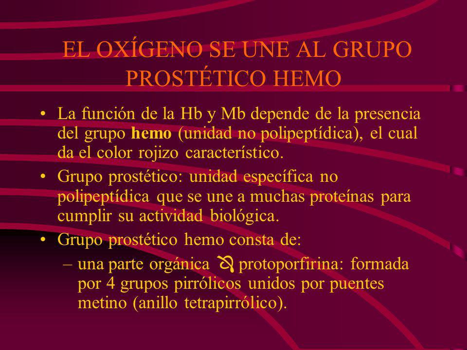 EL OXÍGENO SE UNE AL GRUPO PROSTÉTICO HEMO La función de la Hb y Mb depende de la presencia del grupo hemo (unidad no polipeptídica), el cual da el color rojizo característico.