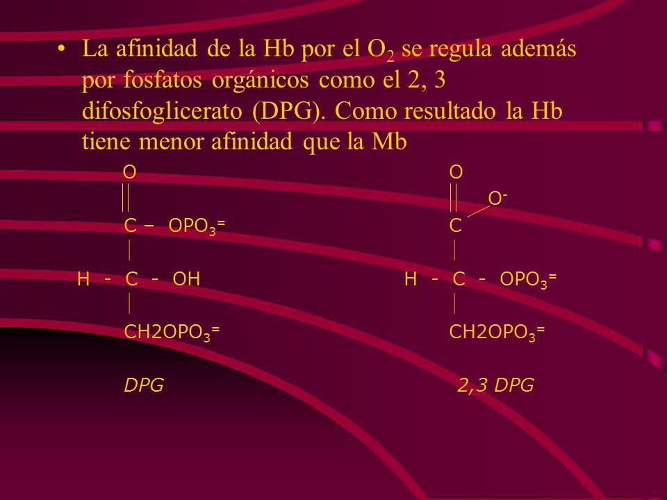 DIFERENCIAS FUNCIONALES ENTRE LA MIOGLOBINA Y LA HEMOGLOBINA La Hb es una proteína alostérica, mientras que la Mb no lo es. Esta diferencia queda refl