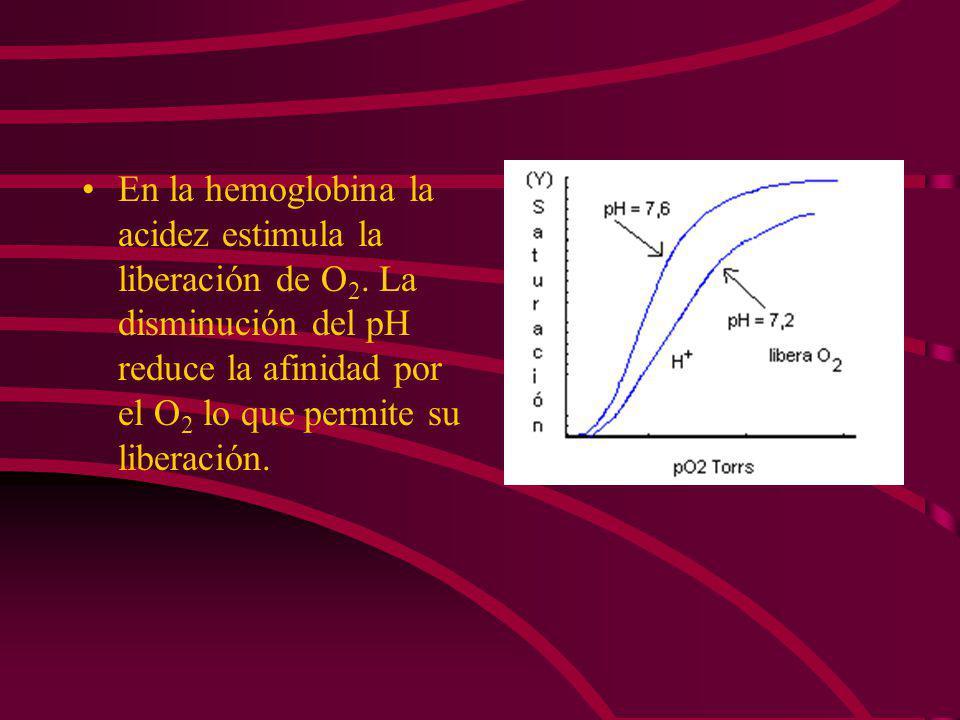 EFECTO BOHR: LOS IONES H + Y EL CO 2 PROMUEVEN LA LIBERACIÓN DE O 2 La mioglobina no manifiesta cambios en la capacidad de unión al O 2 aún con variac