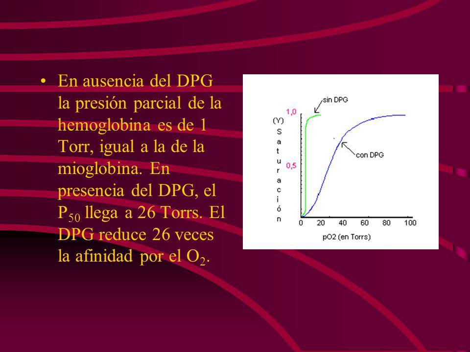 EL DPG DISMINUYE LA AFINIDAD POR EL OXIGENO El 2,3 difosfoglicerato (DPG) se une a la desoxihemoglobina y tiene un efecto importante en la afinidad po