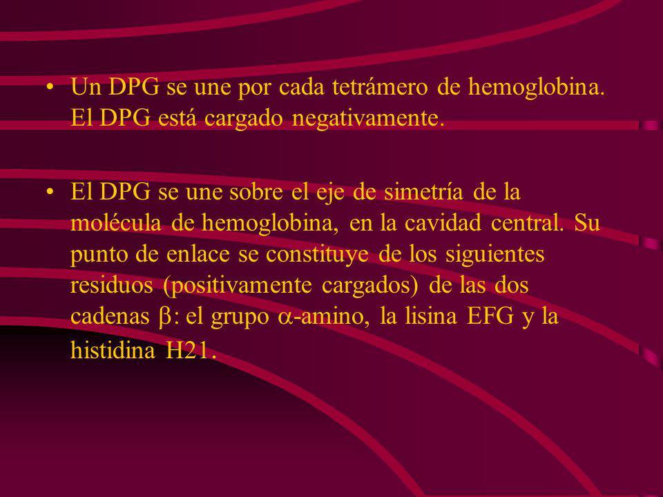 En ausencia del DPG la presión parcial de la hemoglobina es de 1 Torr, igual a la de la mioglobina. En presencia del DPG, el P 50 llega a 26 Torrs. El