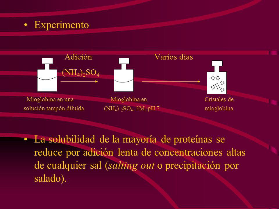 Experimento Adición Varios dias (NH 4 ) 2 SO 4 Mioglobina en una Mioglobina en Cristales de solución tampón diluida (NH 4 ) 2 SO 4, 3M, pH 7 mioglobina La solubilidad de la mayoría de proteínas se reduce por adición lenta de concentraciones altas de cualquier sal (salting out o precipitación por salado).