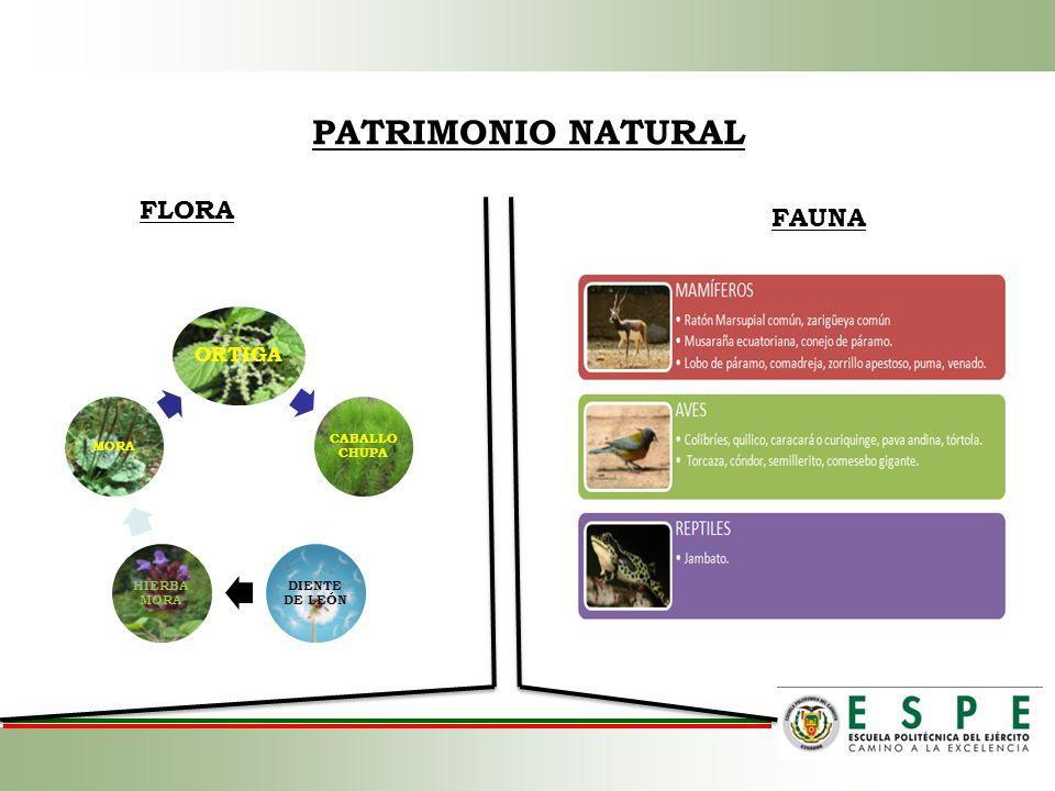 PATRIMONIO NATURAL FLORA ORTIGA CABALLO CHUPA DIENTE DE LEÓN HIERBA MORA MORA FAUNA