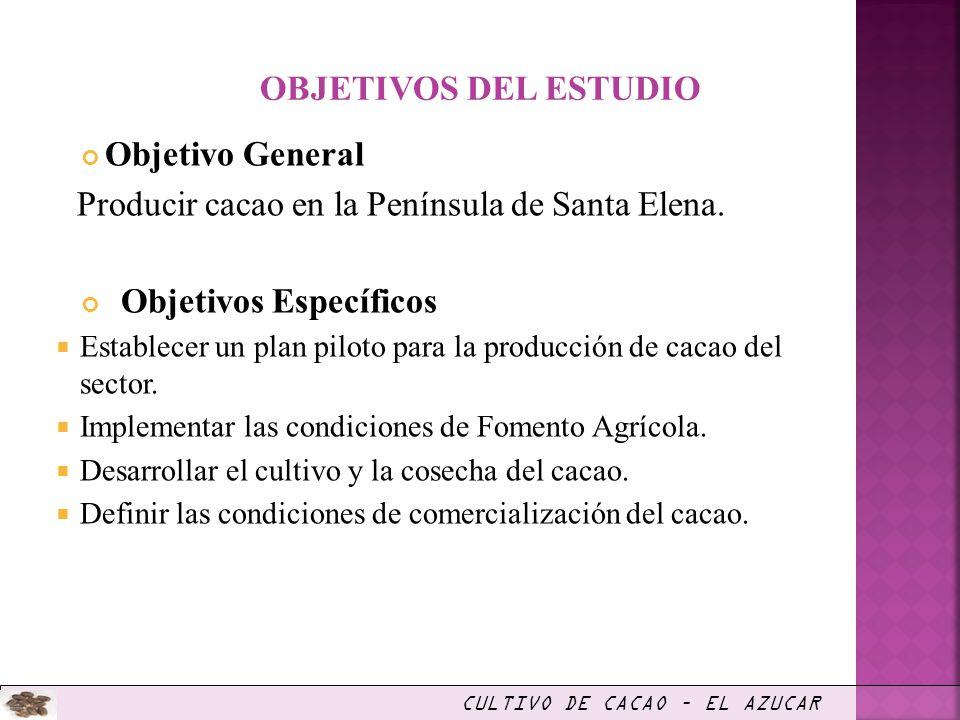 Objetivo General Producir cacao en la Península de Santa Elena. Objetivos Específicos Establecer un plan piloto para la producción de cacao del sector