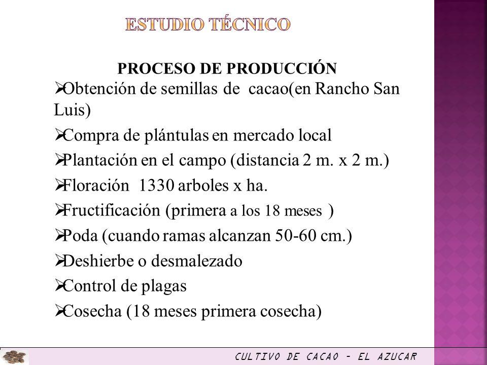 PROCESO DE PRODUCCIÓN Obtención de semillas de cacao(en Rancho San Luis) Compra de plántulas en mercado local Plantación en el campo (distancia 2 m. x