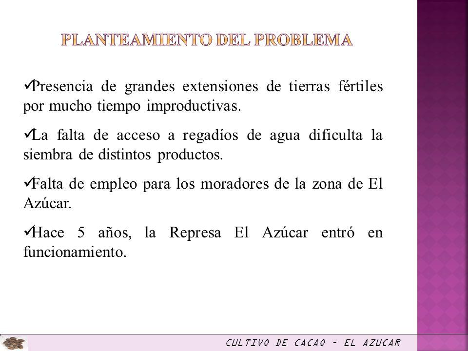 PROCESO DE PRODUCCIÓN Obtención de semillas de cacao(en Rancho San Luis) Compra de plántulas en mercado local Plantación en el campo (distancia 2 m.