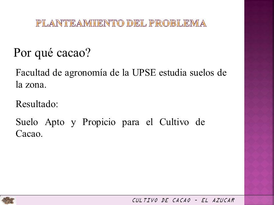 Por qué cacao? CULTIVO DE CACAO – EL AZUCAR Facultad de agronomía de la UPSE estudia suelos de la zona. Resultado: Suelo Apto y Propicio para el Culti