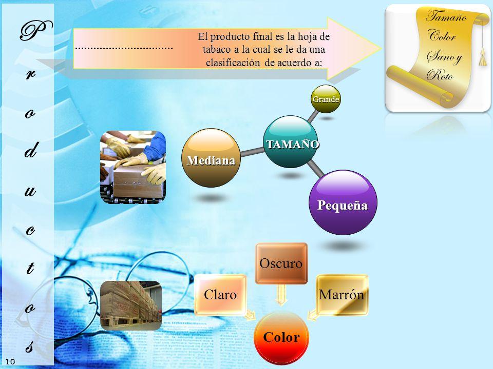 TAMAÑO Grande Mediana Pequeña Tamaño Color Sano y Roto El producto final es la hoja de tabaco a la cual se le da una clasificación de acuerdo a: 10