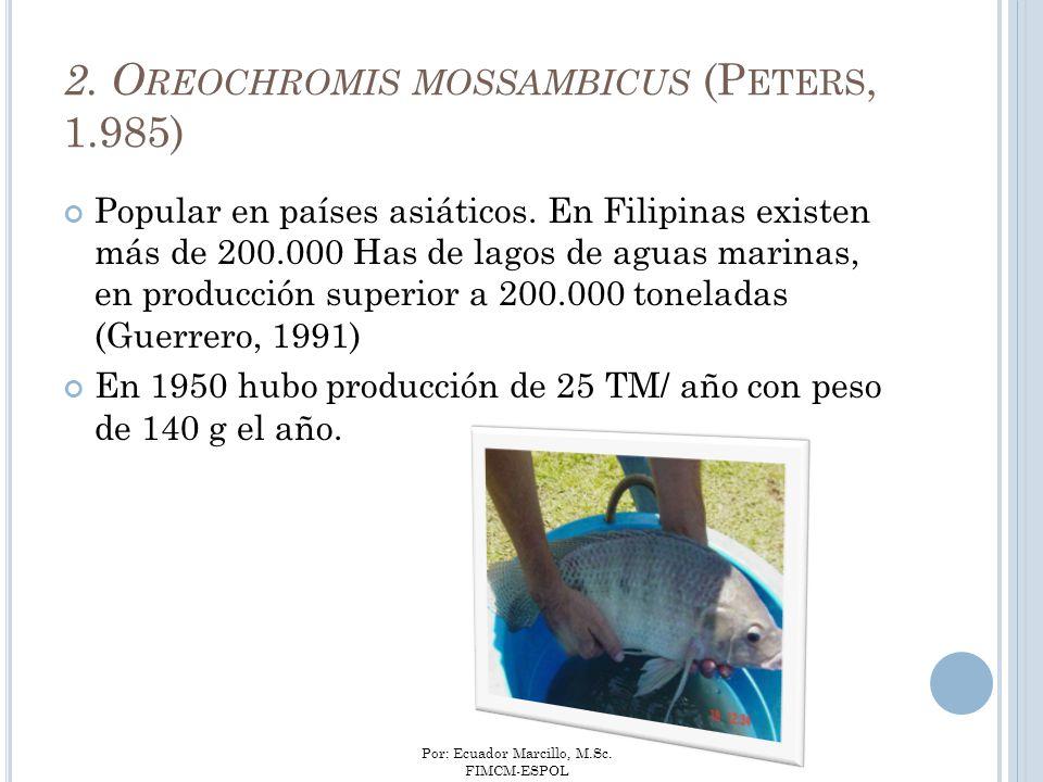 Por: Ecuador Marcillo, M.Sc. FIMCM-ESPOL Popular en países asiáticos. En Filipinas existen más de 200.000 Has de lagos de aguas marinas, en producción