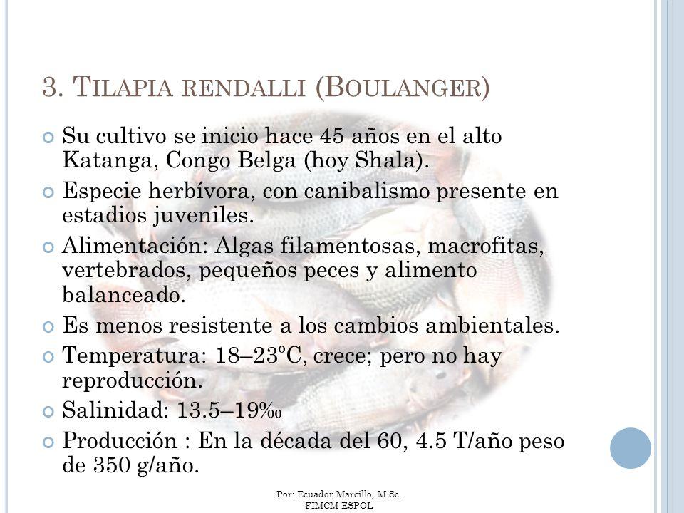 Por: Ecuador Marcillo, M.Sc. FIMCM-ESPOL Su cultivo se inicio hace 45 años en el alto Katanga, Congo Belga (hoy Shala). Especie herbívora, con canibal