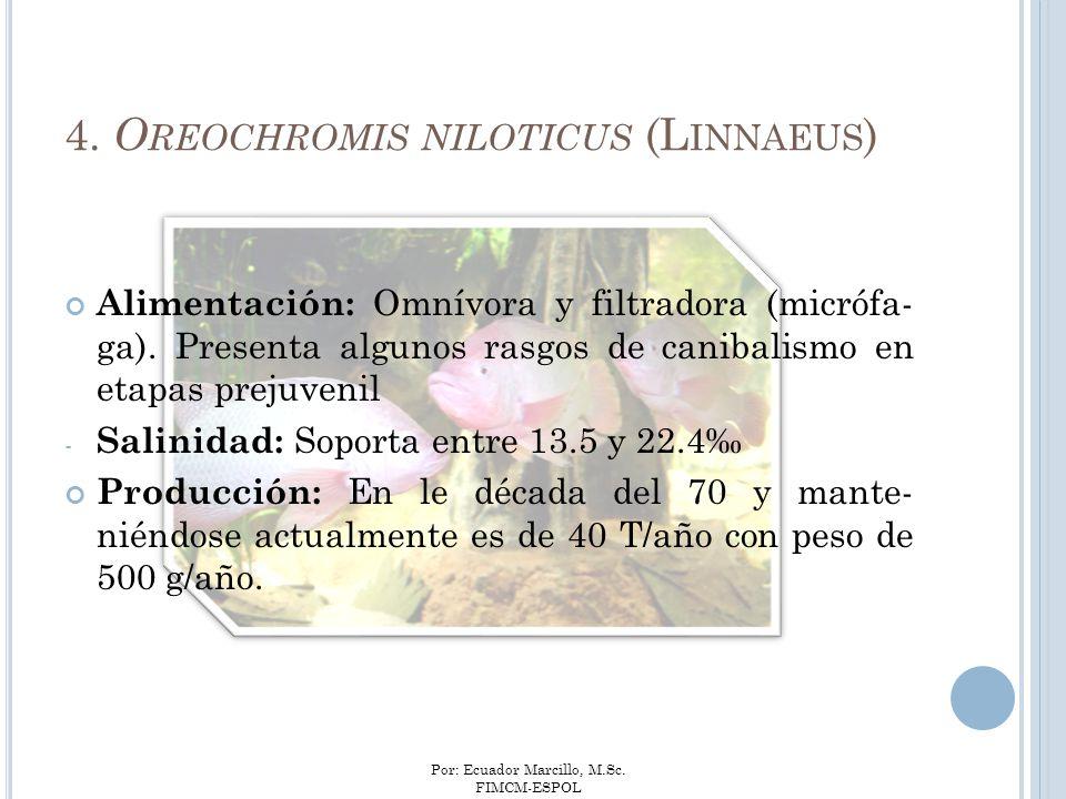 Por: Ecuador Marcillo, M.Sc. FIMCM-ESPOL Alimentación: Omnívora y filtradora (micrófa- ga). Presenta algunos rasgos de canibalismo en etapas prejuveni
