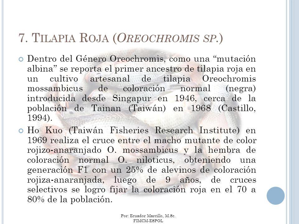 Por: Ecuador Marcillo, M.Sc. FIMCM-ESPOL Dentro del Género Oreochromis, como una mutación albina se reporta el primer ancestro de tilapia roja en un c