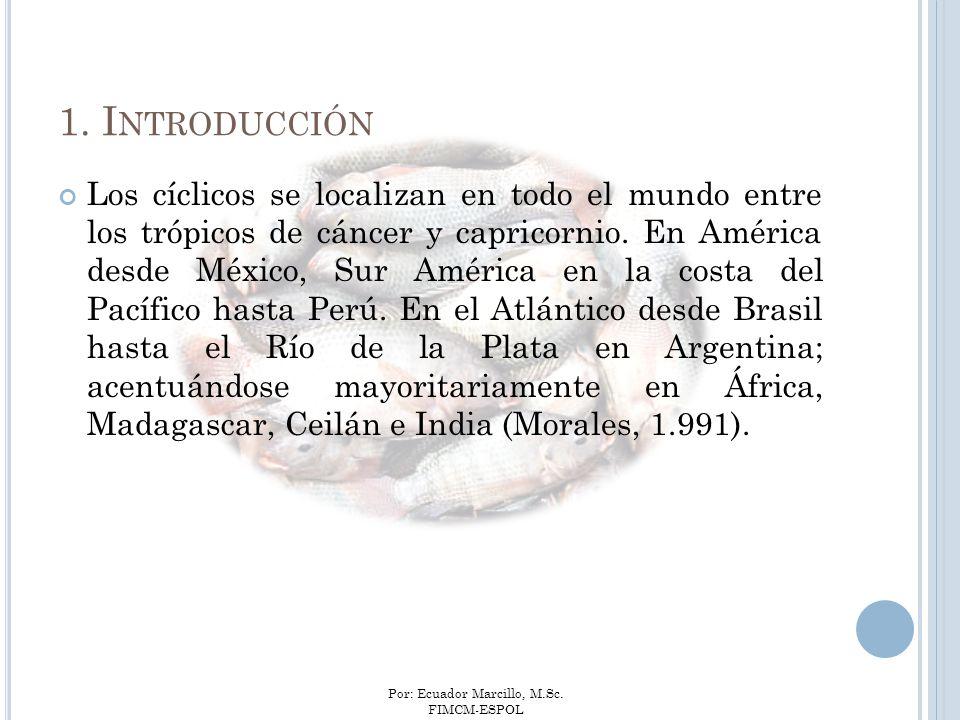 Por: Ecuador Marcillo, M.Sc. FIMCM-ESPOL 1. I NTRODUCCIÓN Los cíclicos se localizan en todo el mundo entre los trópicos de cáncer y capricornio. En Am