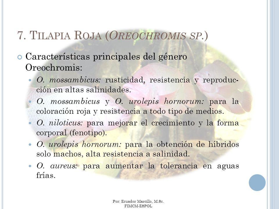 Por: Ecuador Marcillo, M.Sc. FIMCM-ESPOL Características principales del género Oreochromis: O. mossambicus: rusticidad, resistencia y reproduc- ción