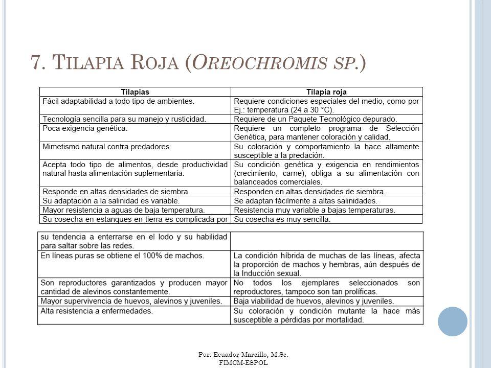 Por: Ecuador Marcillo, M.Sc. FIMCM-ESPOL 7. T ILAPIA R OJA ( O REOCHROMIS SP. )