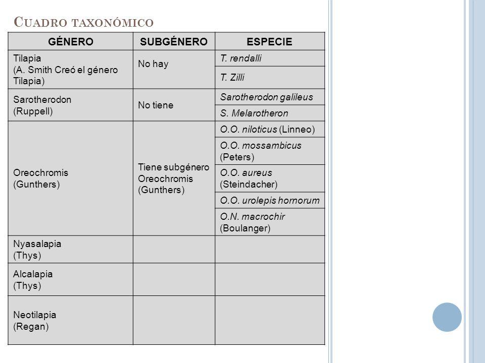 GÉNEROSUBGÉNEROESPECIE Tilapia (A. Smith Creó el género Tilapia) No hay T. rendalli T. Zilli Sarotherodon (Ruppell) No tiene Sarotherodon galileus S.