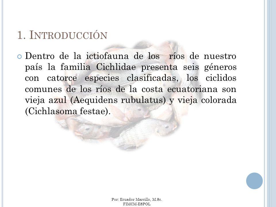 Por: Ecuador Marcillo, M.Sc. FIMCM-ESPOL Dentro de la ictiofauna de los ríos de nuestro país la familia Cichlidae presenta seis géneros con catorce es