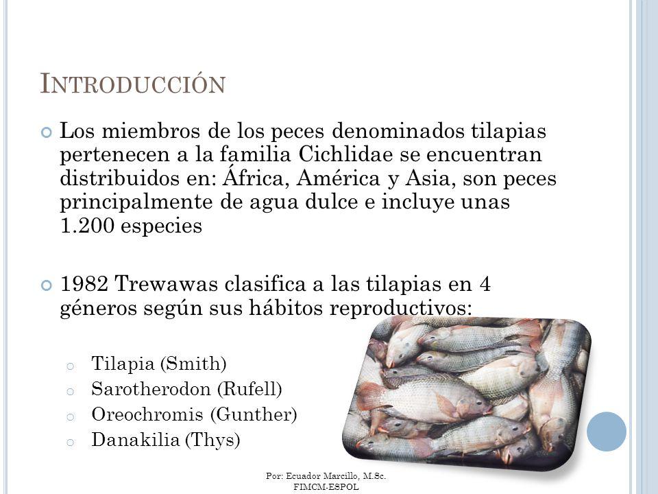 Por: Ecuador Marcillo, M.Sc. FIMCM-ESPOL I NTRODUCCIÓN Los miembros de los peces denominados tilapias pertenecen a la familia Cichlidae se encuentran