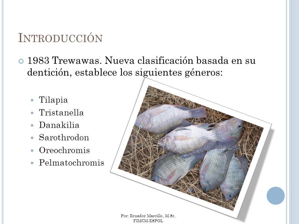Por: Ecuador Marcillo, M.Sc. FIMCM-ESPOL 1983 Trewawas. Nueva clasificación basada en su dentición, establece los siguientes géneros: Tilapia Tristane