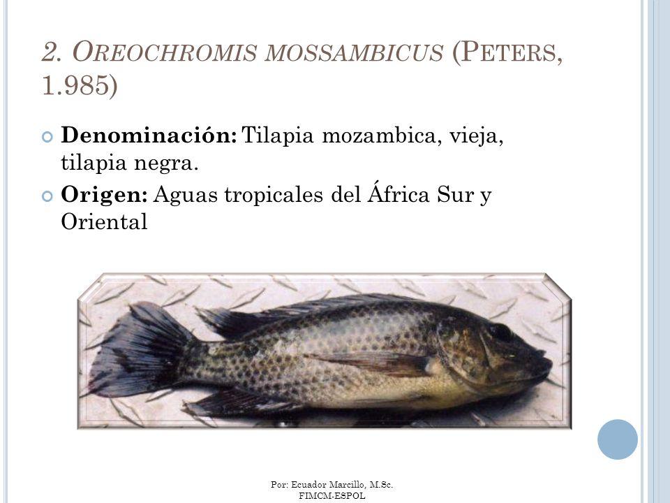 Por: Ecuador Marcillo, M.Sc. FIMCM-ESPOL 2. O REOCHROMIS MOSSAMBICUS (P ETERS, 1.985) Denominación: Tilapia mozambica, vieja, tilapia negra. Origen: A