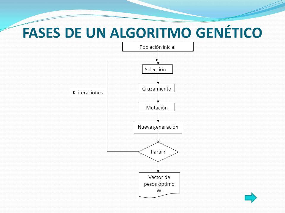 FASES DE UN ALGORITMO GENÉTICO K iteraciones Población inicial Selección Cruzamiento Mutación Nueva generación Parar.