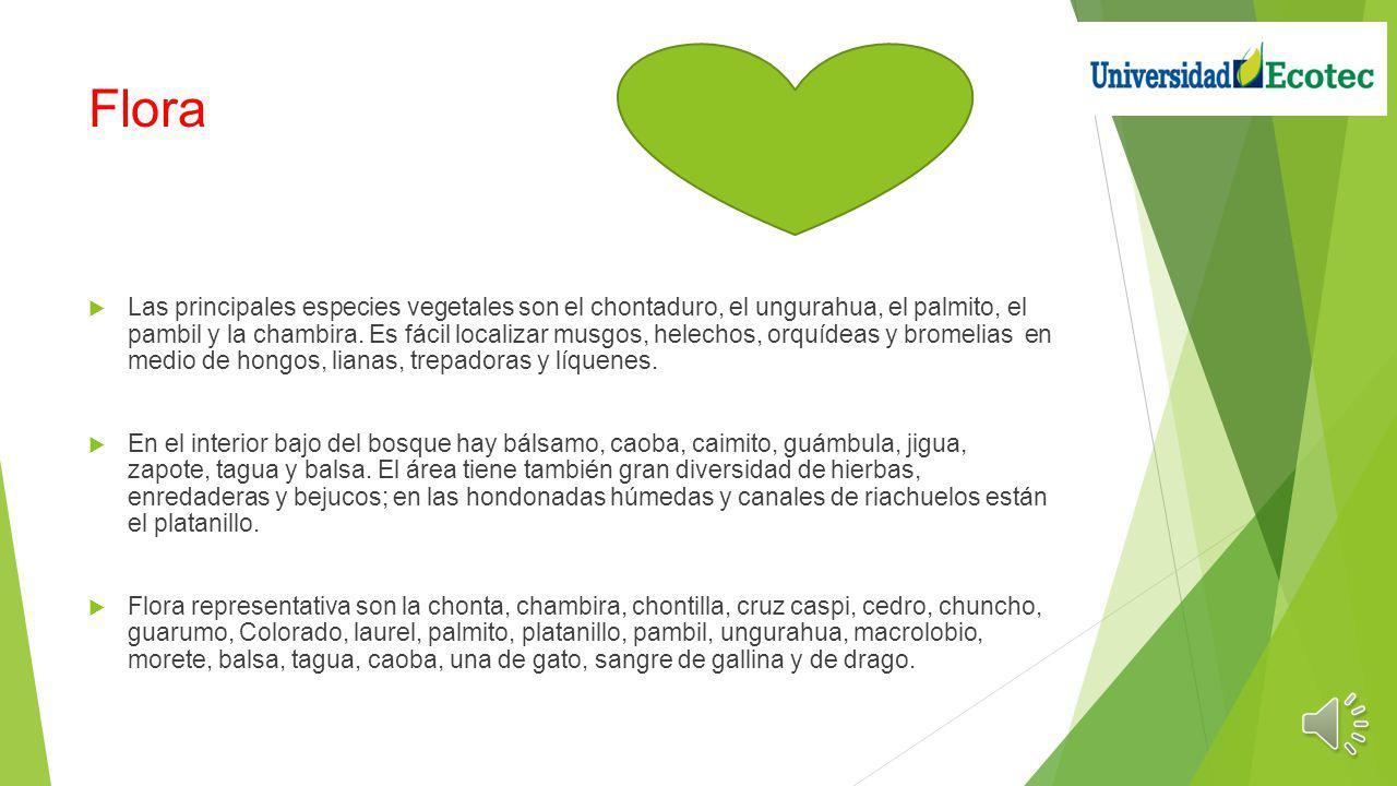 Objetivo El objetivo es que la conservación del Yasuní, como una responsabilidad, orgullo y derecho de todos los ecuatorianos, llegue a la mayor canti