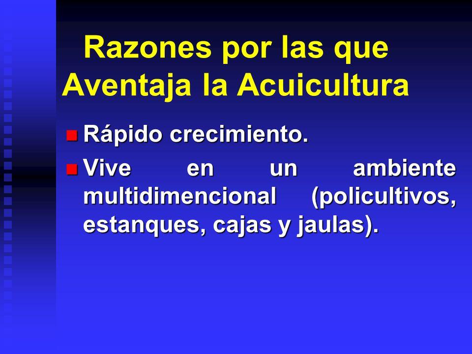 Razones por las que hacemos Acuicultura AlimentaciónEconómico