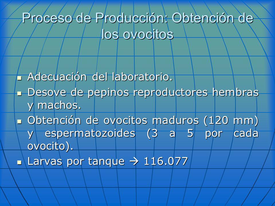 Proceso de Producción: Obtención de los ovocitos Adecuación del laboratorio. Adecuación del laboratorio. Desove de pepinos reproductores hembras y mac