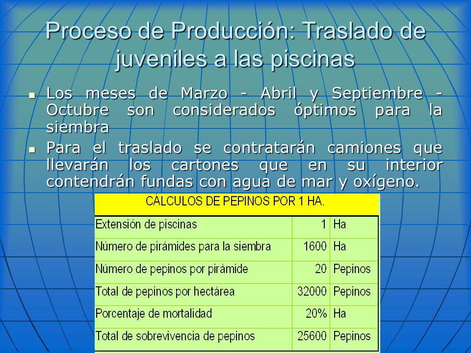 Proceso de Producción: Traslado de juveniles a las piscinas Los meses de Marzo - Abril y Septiembre - Octubre son considerados óptimos para la siembra