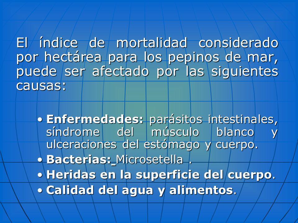 El índice de mortalidad considerado por hectárea para los pepinos de mar, puede ser afectado por las siguientes causas: Enfermedades: parásitos intest
