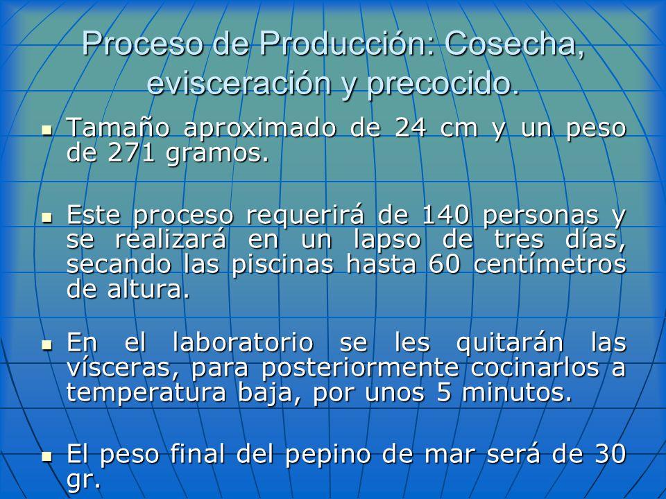 Proceso de Producción: Cosecha, evisceración y precocido. Tamaño aproximado de 24 cm y un peso de 271 gramos. Tamaño aproximado de 24 cm y un peso de