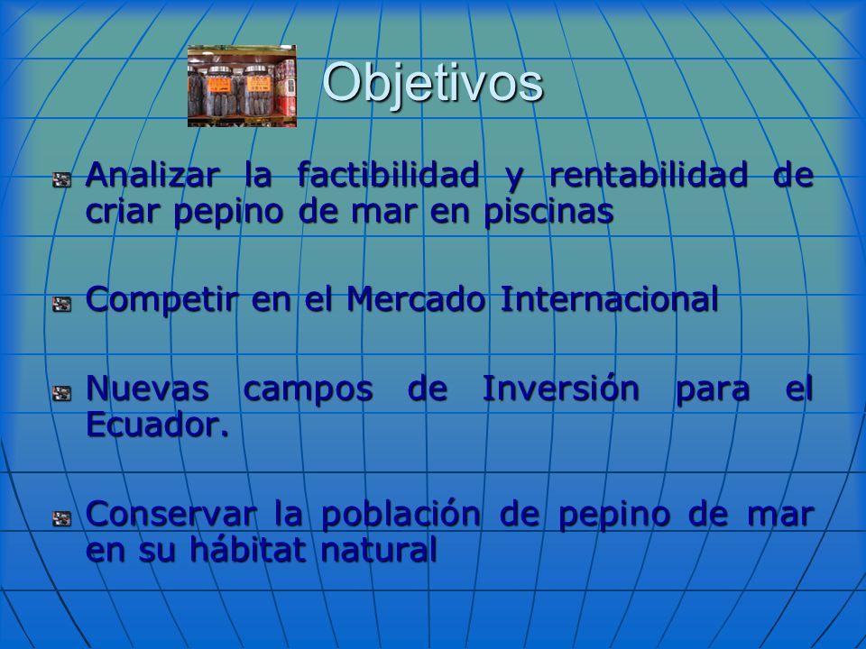 Objetivos Analizar la factibilidad y rentabilidad de criar pepino de mar en piscinas Competir en el Mercado Internacional Nuevas campos de Inversión p