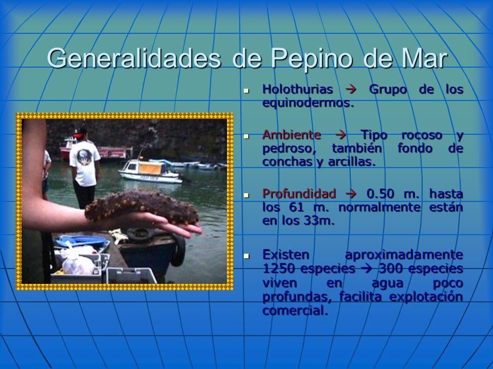 Generalidades de Pepino de Mar Holothurias Grupo de los equinodermos. Holothurias Grupo de los equinodermos. Ambiente Tipo rocoso y pedroso, también f