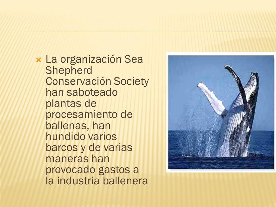 La organización Sea Shepherd Conservación Society han saboteado plantas de procesamiento de ballenas, han hundido varios barcos y de varias maneras ha