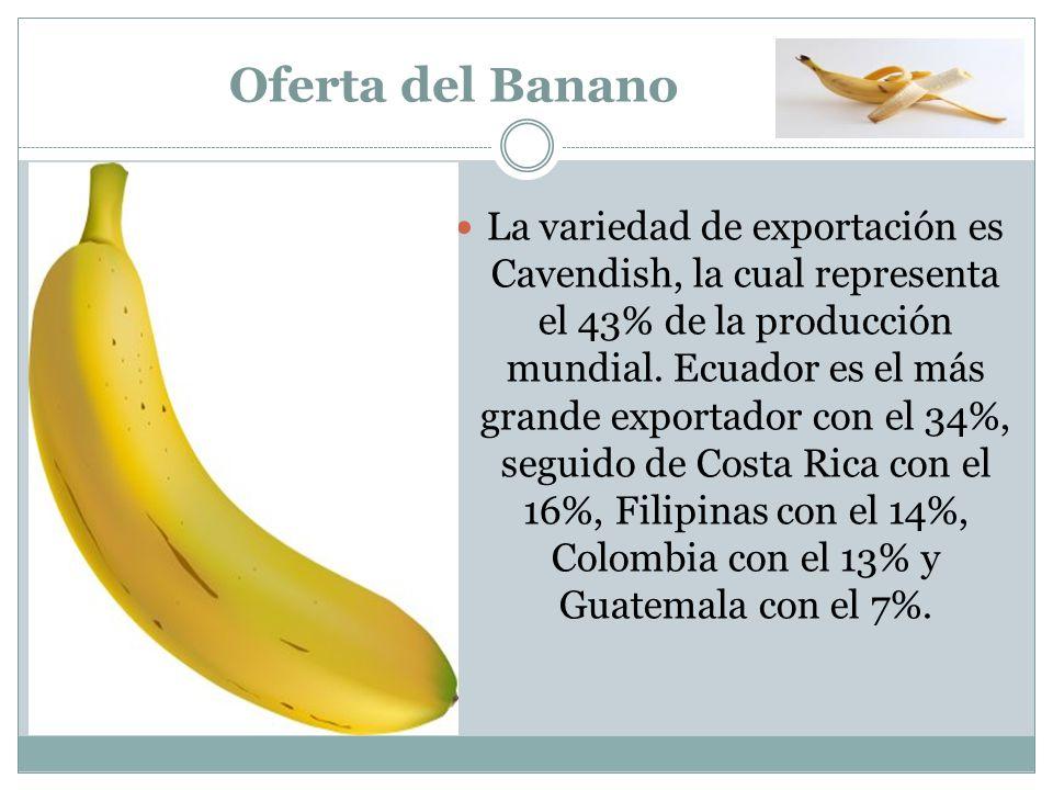 Oferta del Banano La variedad de exportación es Cavendish, la cual representa el 43% de la producción mundial. Ecuador es el más grande exportador con