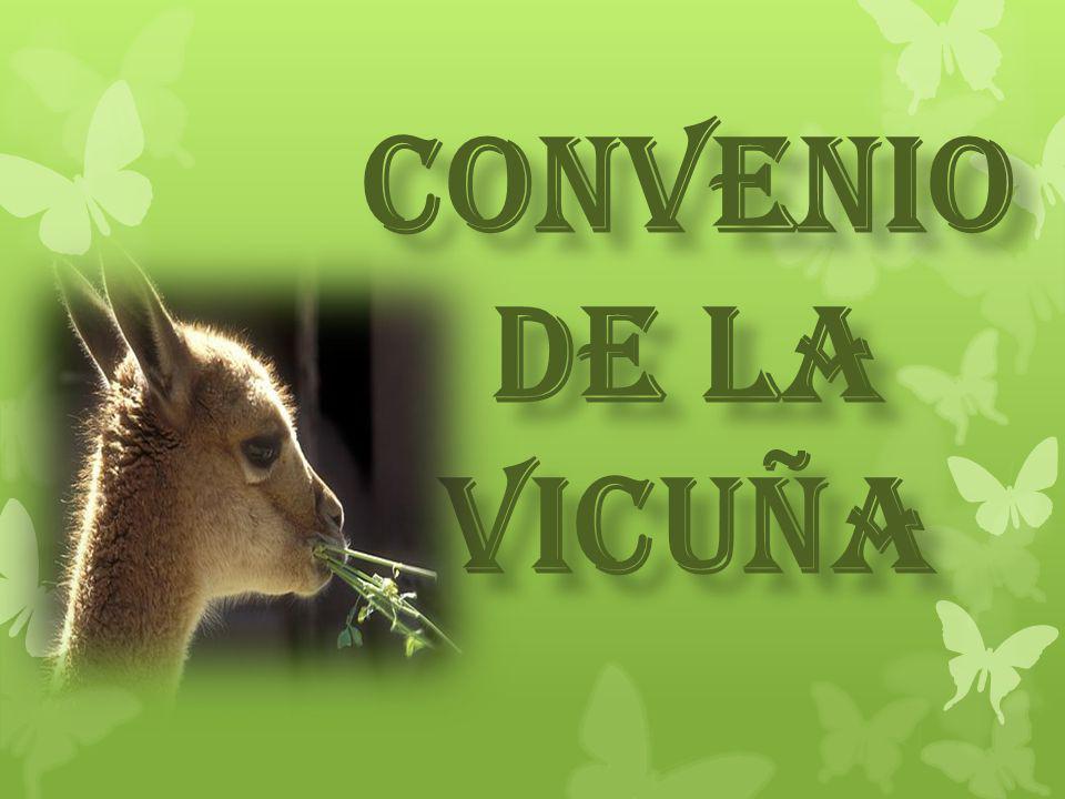 GENERALIDADES LA VICUÑA Es una especie de mamífero artiodáctilo de la familia de los camélidos y del grupo de los camélidos sudamericanos que vive en el altiplano andino, en el noroeste de la Argentina, el oeste de Bolivia, el noreste de Chile, sectores de los Andes de Ecuador, y en las alturas andinas del Perú, país que posee la principal población de la especie.