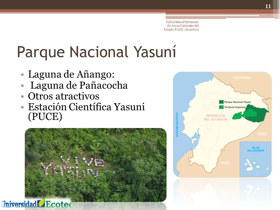 Parque Nacional Yasuní Laguna de Añango: Laguna de Pañacocha Otros atractivos Estación Científica Yasuni (PUCE) 11 Subsistema Patrimonio de Áreas Natu