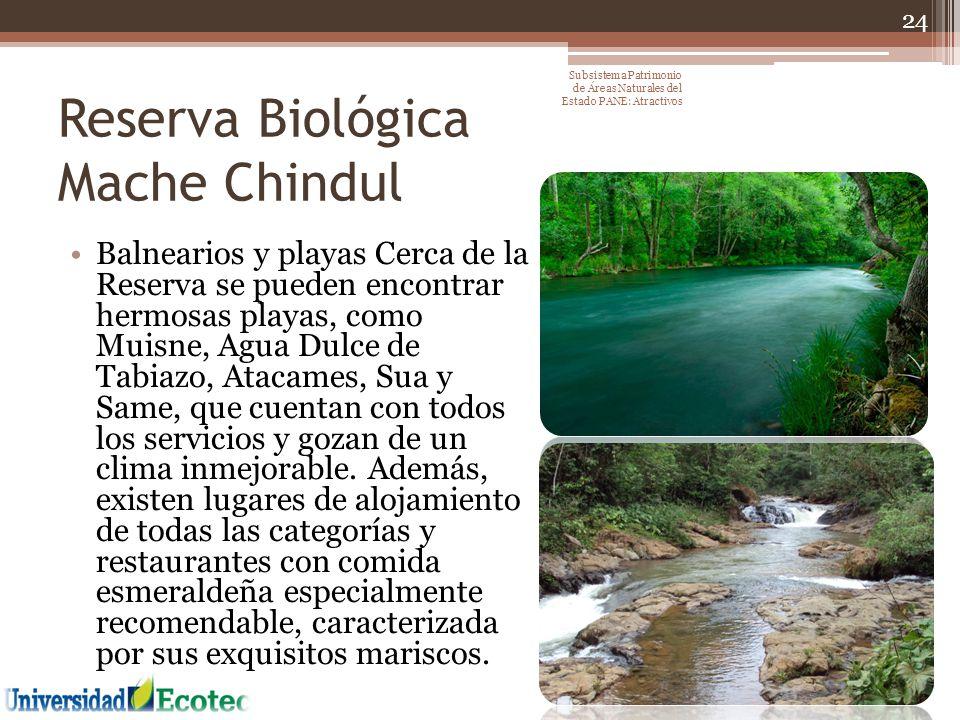 Reserva Biológica Mache Chindul Balnearios y playas Cerca de la Reserva se pueden encontrar hermosas playas, como Muisne, Agua Dulce de Tabiazo, Ataca