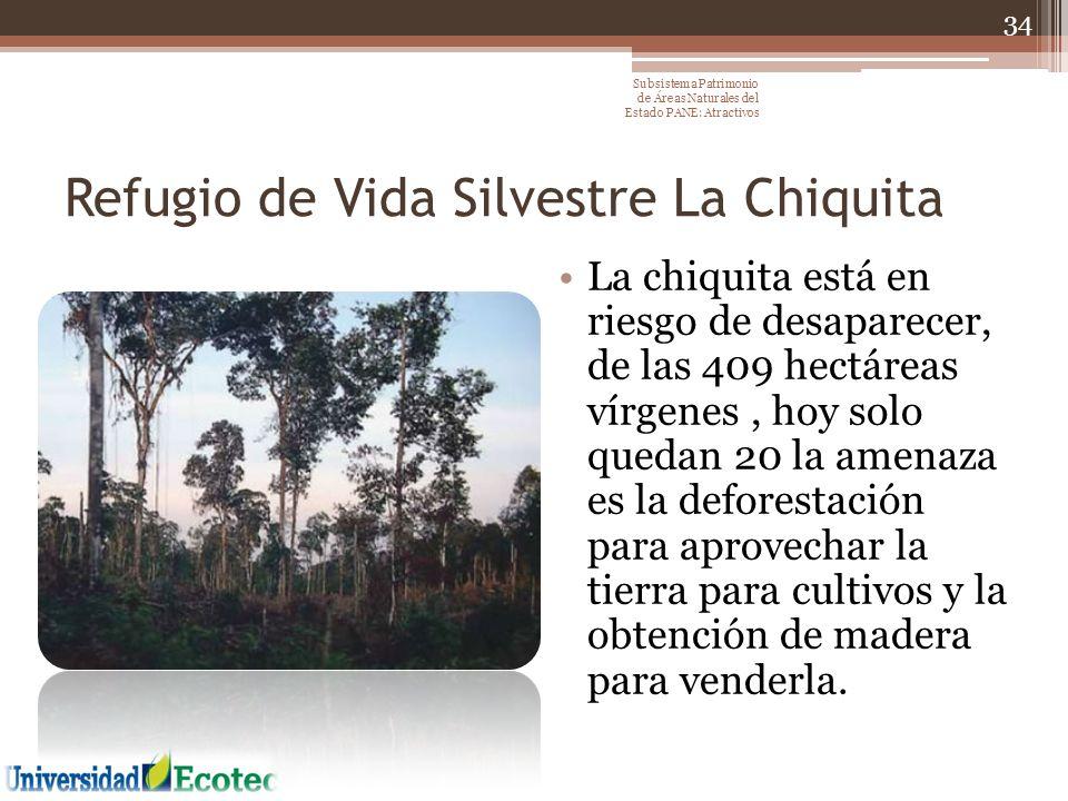 Refugio de Vida Silvestre La Chiquita La chiquita está en riesgo de desaparecer, de las 409 hectáreas vírgenes, hoy solo quedan 20 la amenaza es la de