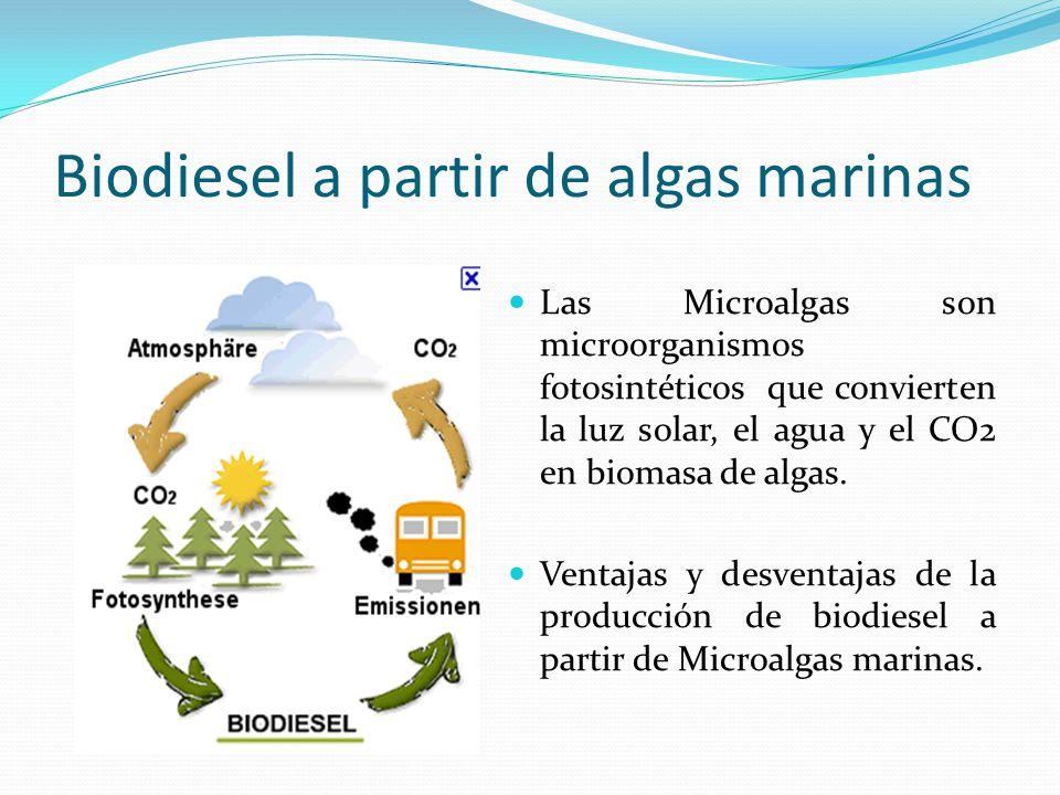 Biodiesel a partir de algas marinas Las Microalgas son microorganismos fotosintéticos que convierten la luz solar, el agua y el CO2 en biomasa de alga