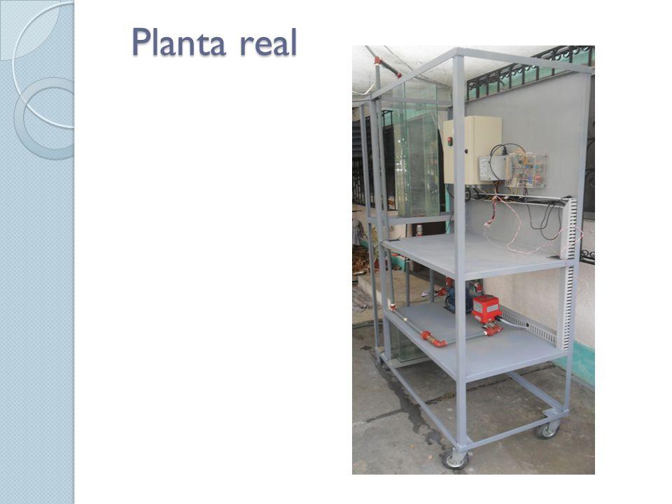 Planta real