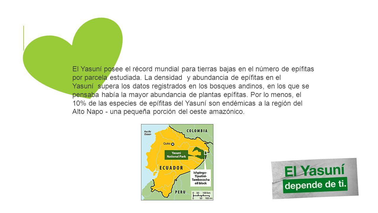 El Yasuní posee el récord mundial para tierras bajas en el número de epífitas por parcela estudiada. La densidad y abundancia de epífitas en el Yasuní