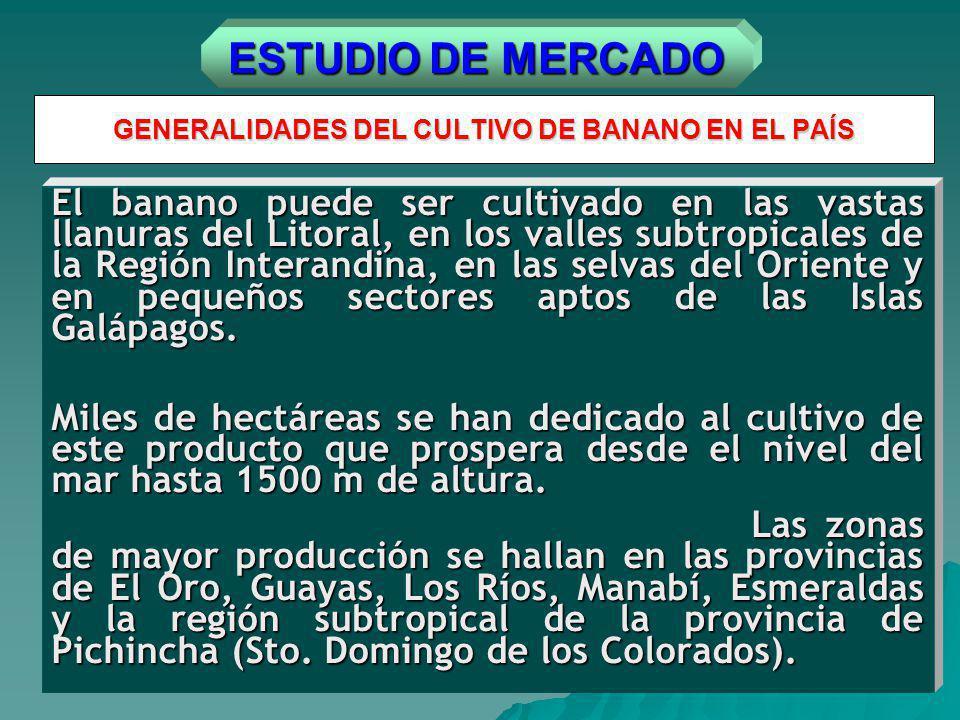 GENERALIDADES DEL CULTIVO DE BANANO EN EL PAÍS El banano puede ser cultivado en las vastas llanuras del Litoral, en los valles subtropicales de la Región Interandina, en las selvas del Oriente y en pequeños sectores aptos de las Islas Galápagos.