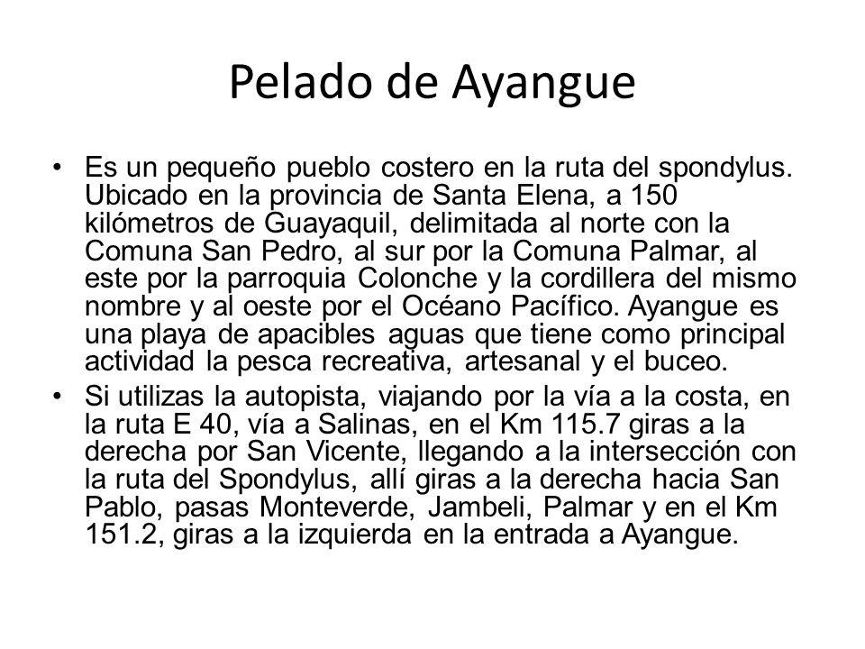 Pelado de Ayangue Es un pequeño pueblo costero en la ruta del spondylus. Ubicado en la provincia de Santa Elena, a 150 kilómetros de Guayaquil, delimi