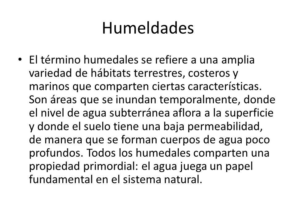 Humeldades El término humedales se refiere a una amplia variedad de hábitats terrestres, costeros y marinos que comparten ciertas características. Son