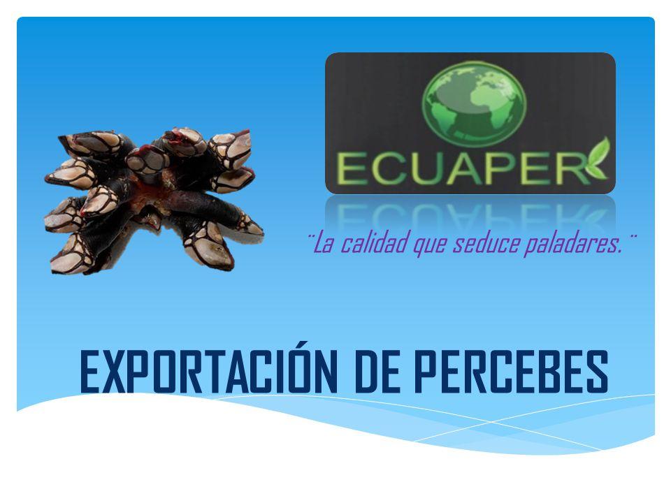 Es una comercializadora y exportadora dedicada a la venta interna y exportación de PERCEBES, un crustáceo que nace en los peñascos del perfil costeros de Ecuador.