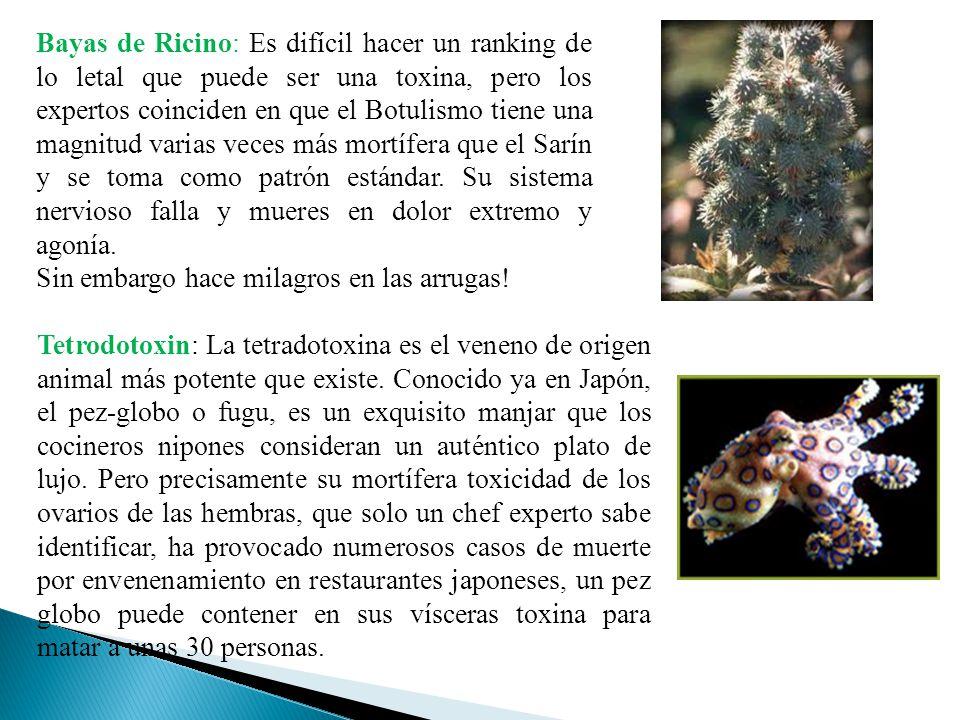 Bayas de Ricino: Es difícil hacer un ranking de lo letal que puede ser una toxina, pero los expertos coinciden en que el Botulismo tiene una magnitud