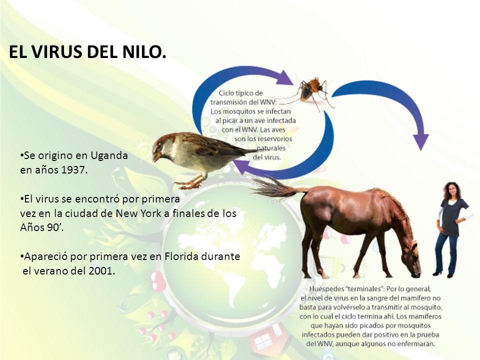 EL VIRUS DEL NILO. Se origino en Uganda en años 1937. El virus se encontró por primera vez en la ciudad de New York a finales de los Años 90. Apareció