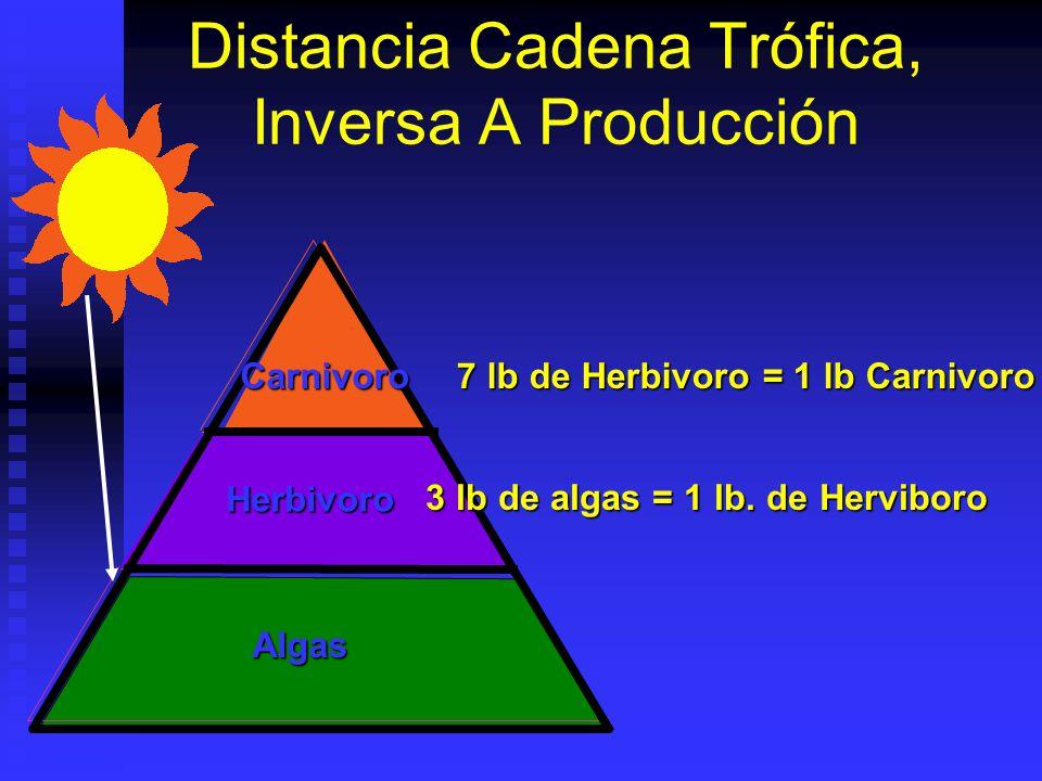 Distancia Cadena Trófica, Inversa A Producción Carnivoro Herbivoro Algas 7 lb de Herbivoro = 1 lb Carnivoro 3 lb de algas = 1 lb. de Herviboro