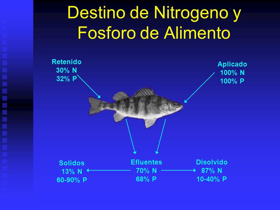 Destino de Nitrogeno y Fosforo de Alimento Aplicado 100% N 100% P Retenido 30% N 32% P Disolvido 87% N 10-40% P Solidos 13% N 60-90% P Efluentes 70% N